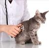 Ветеринарные клиники в Аткарске